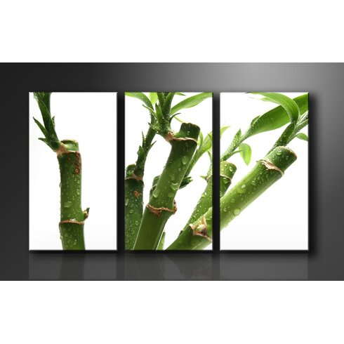 Bamboo 3 Piece Photographic Print Wrapped on Canvas Set