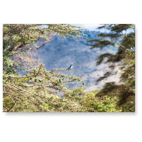 Kingfisher Photographic Print Plaque