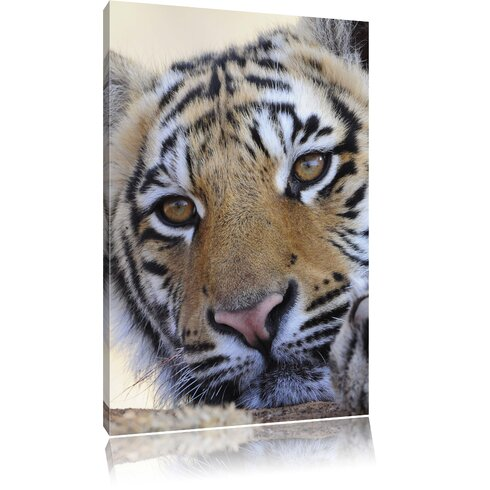 Tiger Photographic Print on Canvas