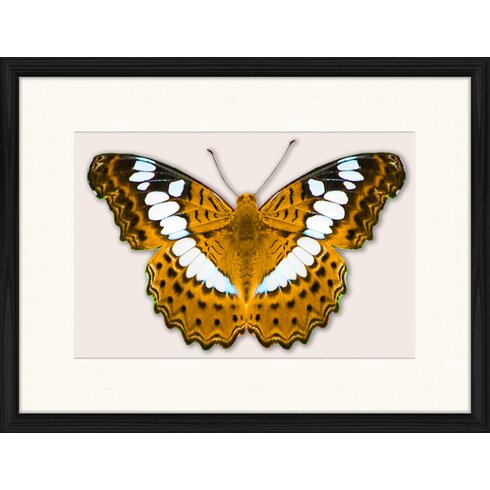 Butterfly Series 34 Framed Graphic Art