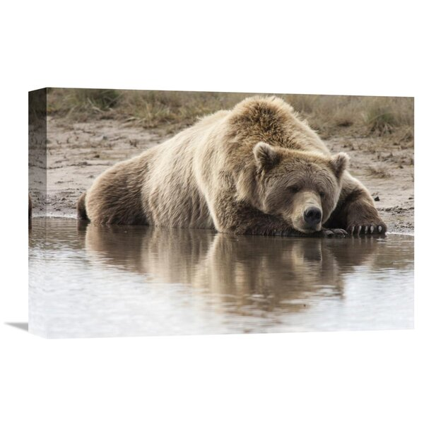 Nature Photographs Grizzly Bear Sleeping on Shore, Katmai National Park, Alaska by Matthias Breiter Photographic Print on Wrapped Canvas by Global Gallery