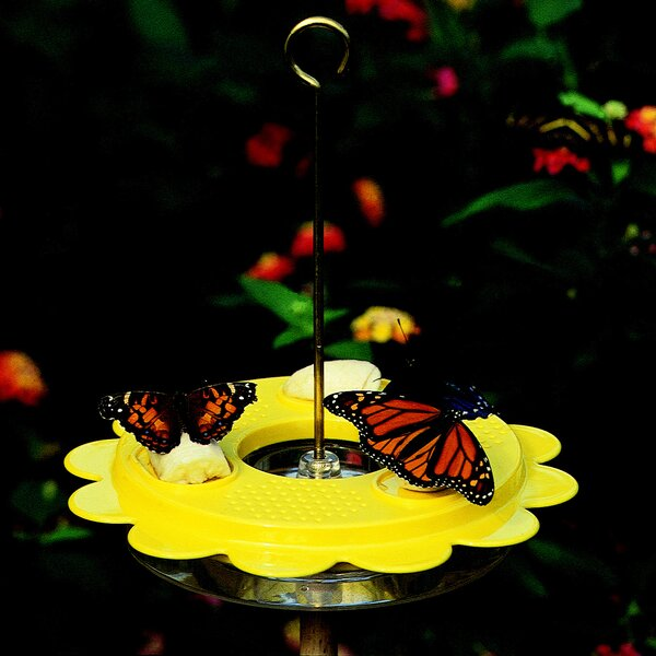 12 Oz. Flutterby Butterfly Hummingbird Feeder by B