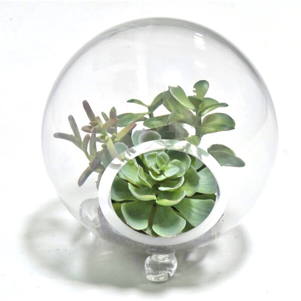 Succulent Plant in Terrarium by Gold Eagle USA
