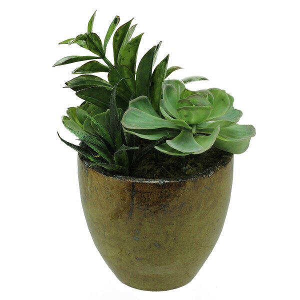 Artificial Mixed Succulent Desk Top Plant in Decorative Pot by Northlight Seasonal