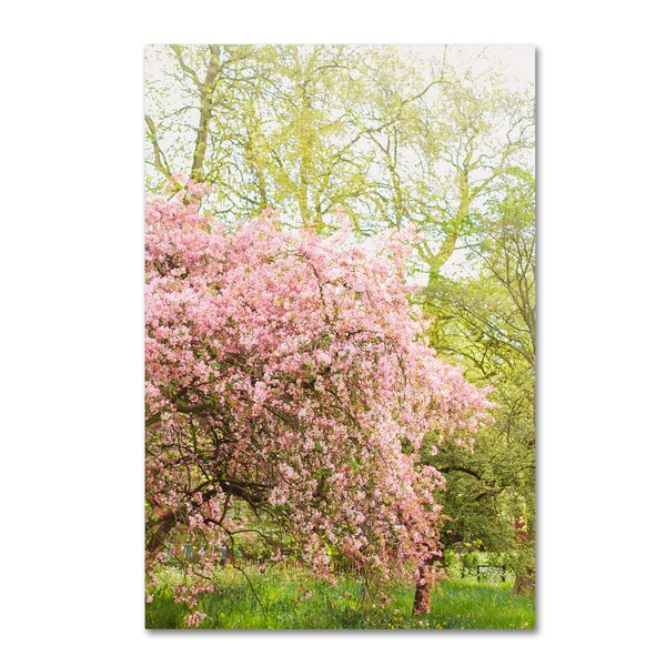 Pink Cherry Blossoms by Ariane Moshayedi Photographic Print on Wrapped Canvas by Trademark Fine Art