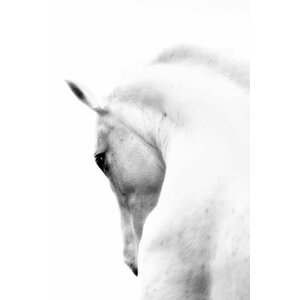 'White Horse Wrapped' Photographic Print on Canvas by Union Rustic