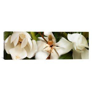 'Close-up of Magnolia Flowers' Photographic Print on Canvas by East Urban Home