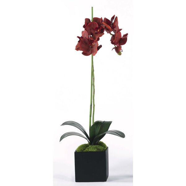 Single Orchid Floral Arrangement in Planter by Latitude Run