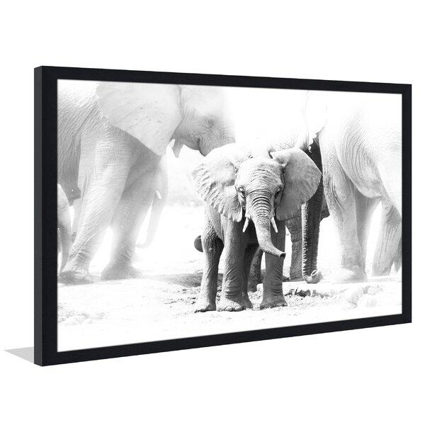 Baby Elephant Framed Photographic Print by Picture Perfect International