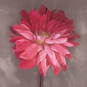'Pink Zinnia' Graphic Art Print on Canvas by East Urban Home