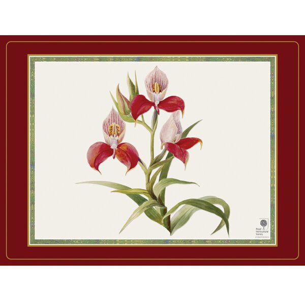 Botanical Orchid Placemat (Set of 4) by Pimpernel