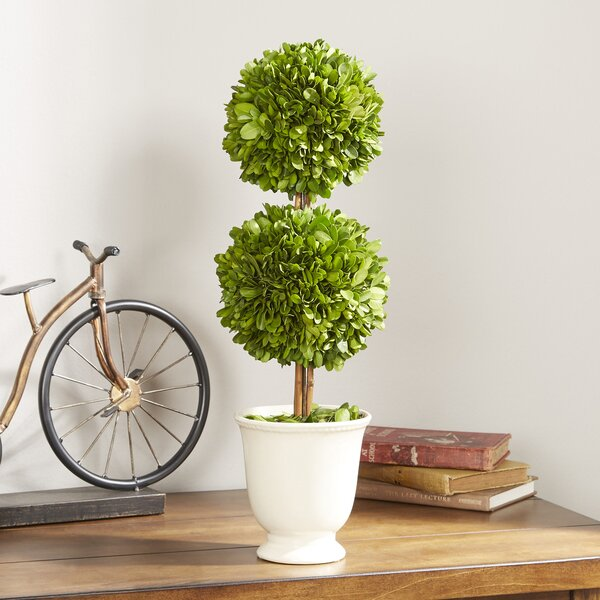 Gaudreau Double Ball Topiary in Pot by One Allium