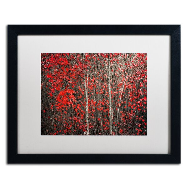 The Hush Before Winter by Philippe Sainte-Laudy Framed Photographic Print by Trademark Fine Art