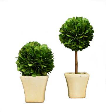 2 Piece Boxwood Desktop Topiary in Pot Set by Charlton Home