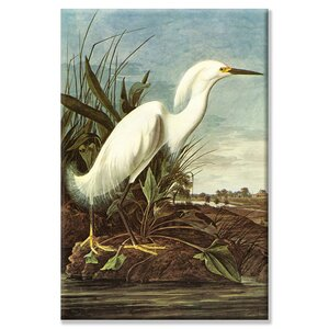'Snowy Egret' by John Audubon Painting Print on Wrapped Canvas by Buyenlarge