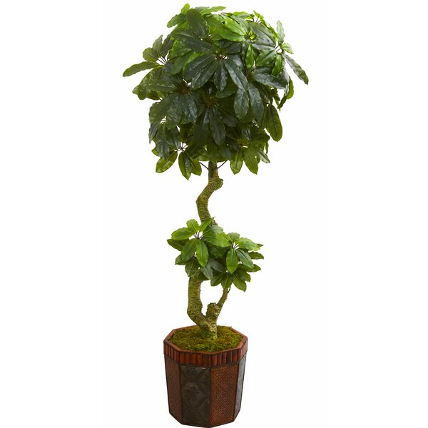 Schefflera Floor Foliage Tree in Planter by World Menagerie