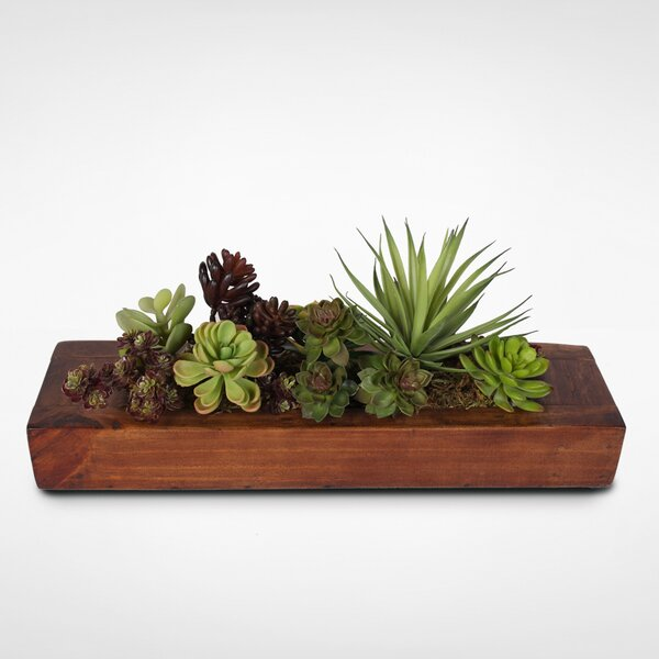 Garden in Wooden Desktop Succulent Plant in Planter by Foundry Select