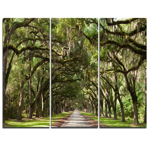 Live Oak Tunnel - 3 Piece Graphic Art on Wrapped Canvas Set by Design Art