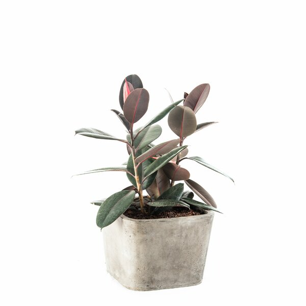 Soreno Tapered Composite Pot Planter by My Spirit Garden