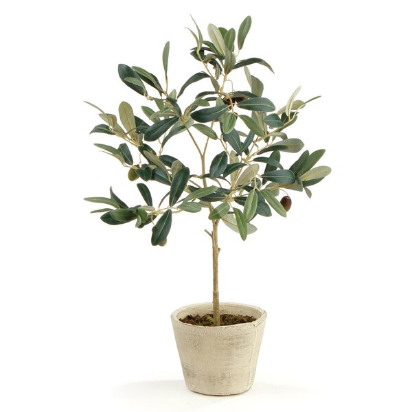 Olive Tree in Pot (Set of 2) by Charlton Home