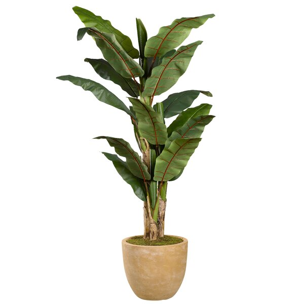 Banana Leaf Tree in Planter by Greyleigh