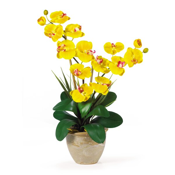 Double Phalaenopsis Silk Orchid Flower in Yellow by Nearly Natural