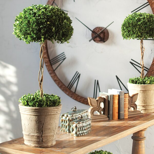 Preserved Ceramic Tree Topiary Planter by Darby Home Co