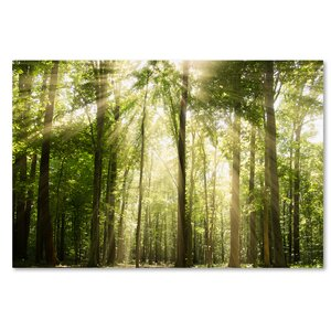 Sunrays Through Treetops Photographic Print on Wrapped Canvas by Trademark Fine Art
