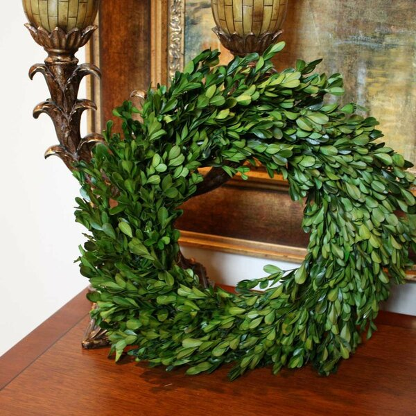 Preserved Boxwood Wreath by Gracie Oaks