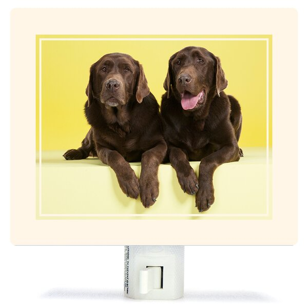 Chocolate Labs On Yellow by Catherine Ledner Canvas Night Light by Oopsy Daisy