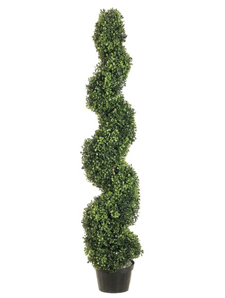 Pond Spiral Top Boxwood Topiary in Planter by Darby Home Co