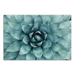 'Turquoise Succulent' Photographic Print on Wrapped Canvas by Latitude Run