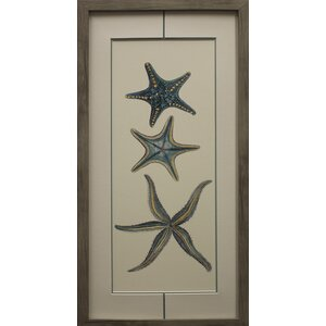 Aquamarine Starfish I Framed Graphic Art Print on Paper by Star Creations
