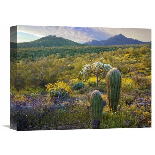 Nature Photographs Ajo Mountains, Organ Pipe Cactus National Monument, Sonoran Desert, Arizona Photographic Print on Wrapped Canvas by Global Gallery
