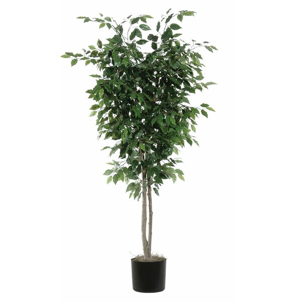 Ficus Deluxe Foliage Tree in Pot by Darby Home Co
