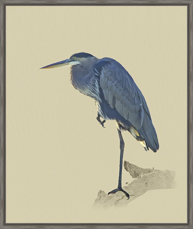 Ashton Wall Décor LLC Birds \'Great Blue Heron\' Framed Graphic Art ...