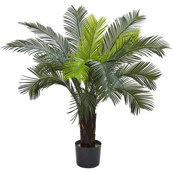 Cycas Tree in Pot by Nearly Natural