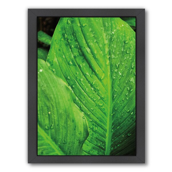 Jardim Botanico I Framed Photographic Print by Bay Isle Home