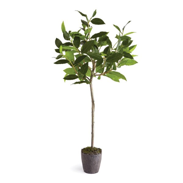 Bayleaf Drop-In Tree in Pot by Beachcrest Home