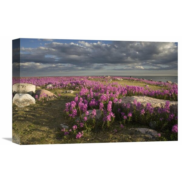 Nature Photographs Fireweed Covered Island, Hudson Bay, Canada by Matthias Breiter Photographic Print on Wrapped Canvas by Global Gallery