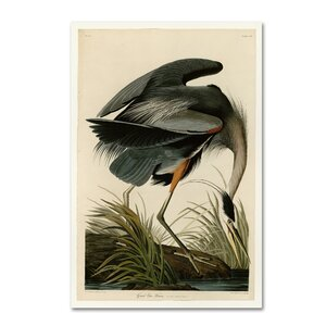 'Great Blue Heron' by John James Audobon Print on Wrapped Canvas by Trademark Fine Art