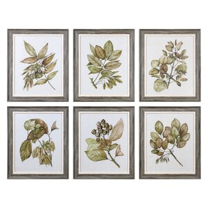 Seedlings 6 Piece Framed Graphic Art Set by Darby Home Co