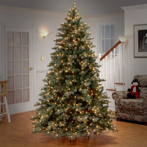 75u0027 colorado spruce frosted artificial christmas tree with 750 clear lights with stand