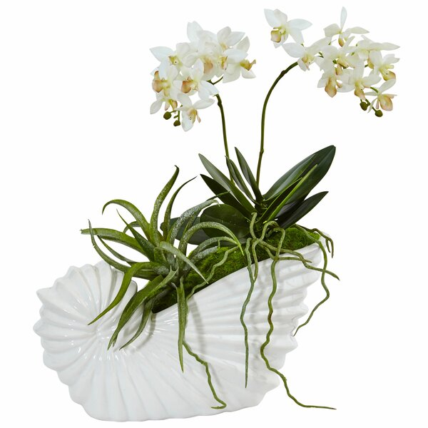 Silk Succulent and Mini Phalaenopsis Floral Arrangement in Shell Ceramic Planter by Highland Dunes