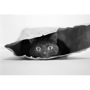 'Cat in a bag' Graphic Art Print on Wrapped Canvas by My Art Outlet