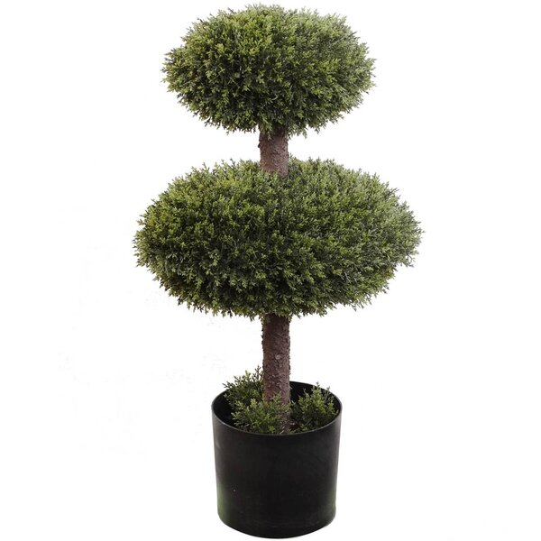 Double Cedar Topiary in Pot by Larksilk