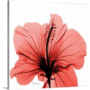 Hibiscus X-Ray by Albert Koetsier Photographic Print on Canvas by Great Big Canvas