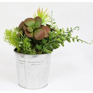 Artificial Desktop Succulent Plant In Pot