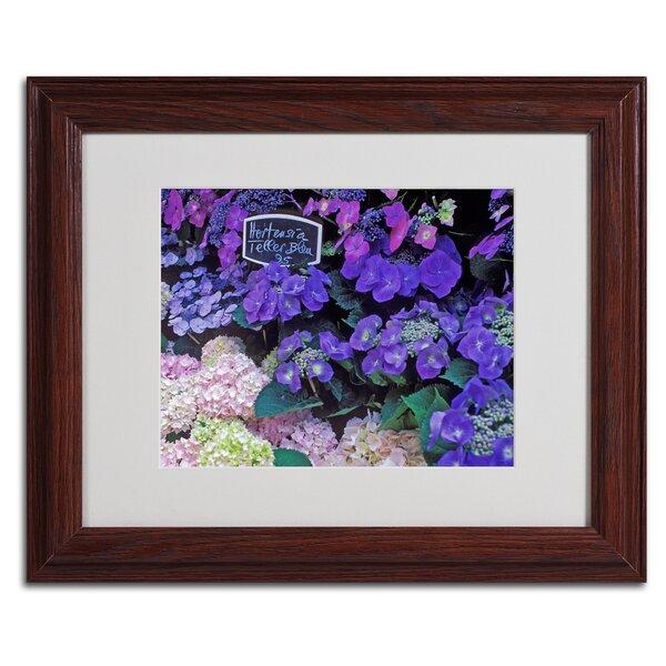 Paris Flower Market Hydrangeas by Kathy Yates Framed Photographic Print by Trademark Fine Art