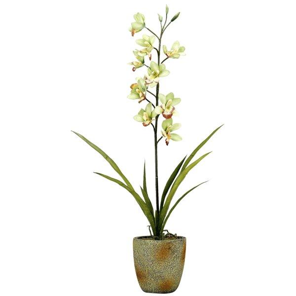 Cymbidium Orchids Floral Arrangement in Planter by Mercer41